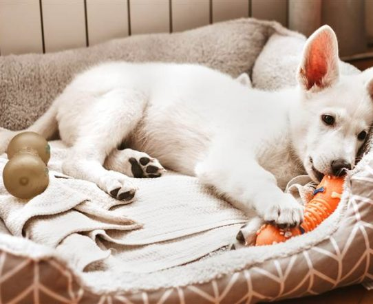 Find Out are Expensive Dog Beds Worth It for Your Dog.